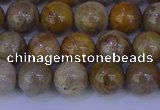 CFC202 15.5 inches 8mm round fossil coral beads wholesale